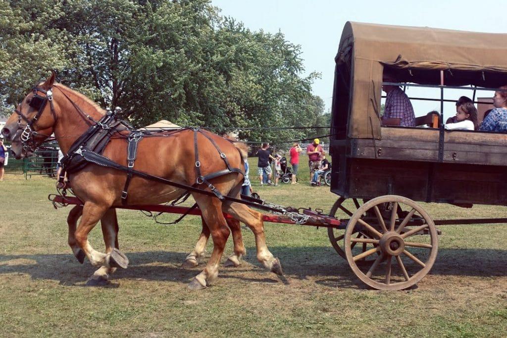Annual Marshville Heritage Festival